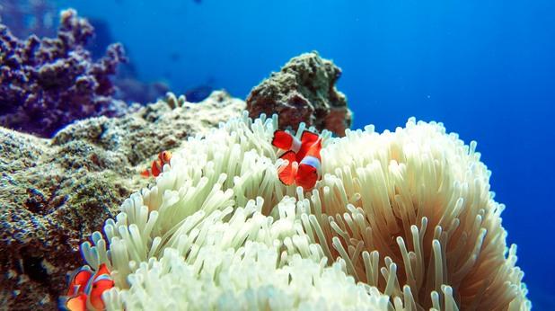 индонезия, корали, морски обитатели, риби