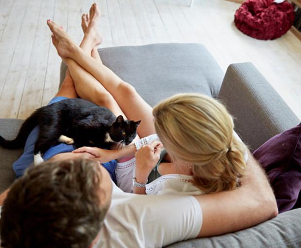 котка, мъж, жена