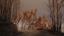 огнено бедствие, пожар, пожар в португалия