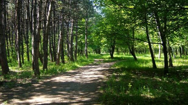 западен парк, софия, дървета