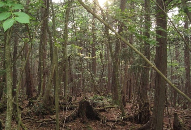 Гората на самоубийците в Япония