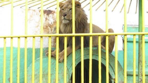 Зоопаркът в Разград