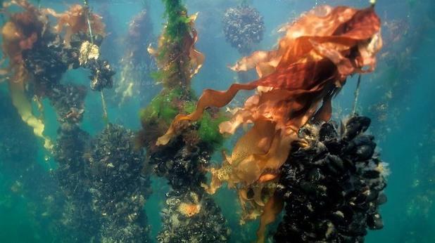 Бъдещето на подводното земеделие