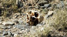 cartel-skull-0412