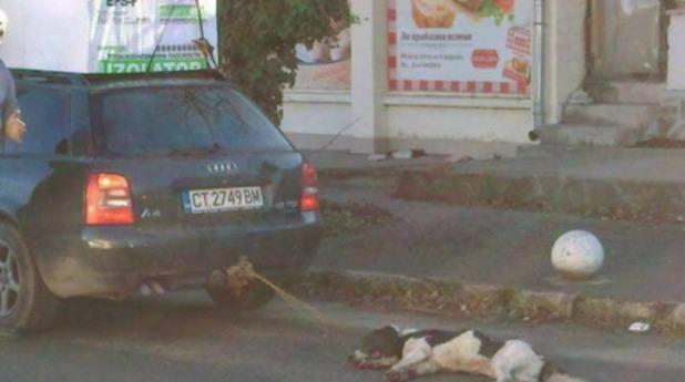 Кола влачи куче