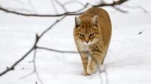 време, котка, сняг, котка в снега