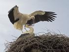 storks-