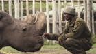Носорогът Судан