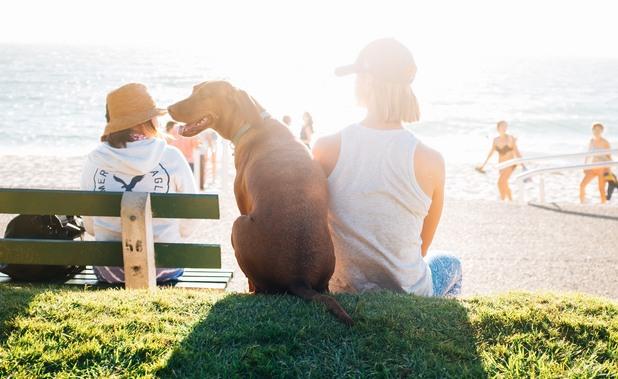 куче, море, лято, плаж, куче на плажа, куче през лятото