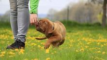 Куче в парка