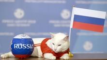 мондиал 2018, световно първенство, русия 2018, групи, русия, саудитска арабия, оракул, котка, ахил 2