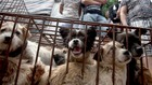 Китайският фестивал на кучешкото месо