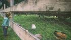 пилета