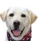 съли, кучето на джордж буш-старши