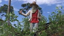 Колумбиец пръска посевите си кока